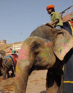 elephantride-amberpalace