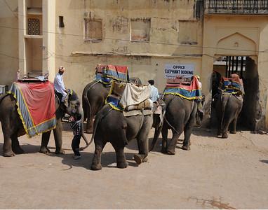 elephantbookingoffice