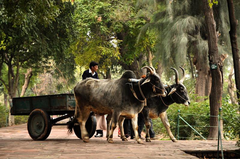 India '13 -  705