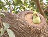 Bird at Rajvilas, Jaipur