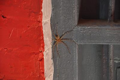 big spider in my room