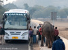 Another elephant on the street causes a tourist bus to stop for a photo op.