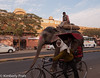 Yep, there are elephants walking down the streets in Jaipur!