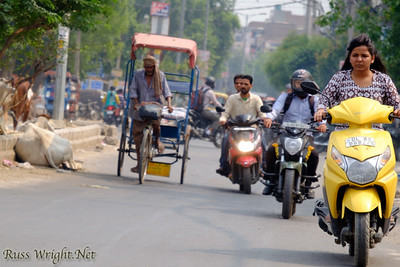 Scooters, motorcycles, cycle rickshaws and cows share the street. New Delhi, India. 2015
