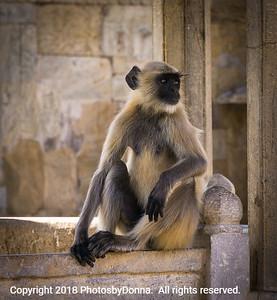 An Introspective Monkey