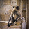 An Introspective Monkey