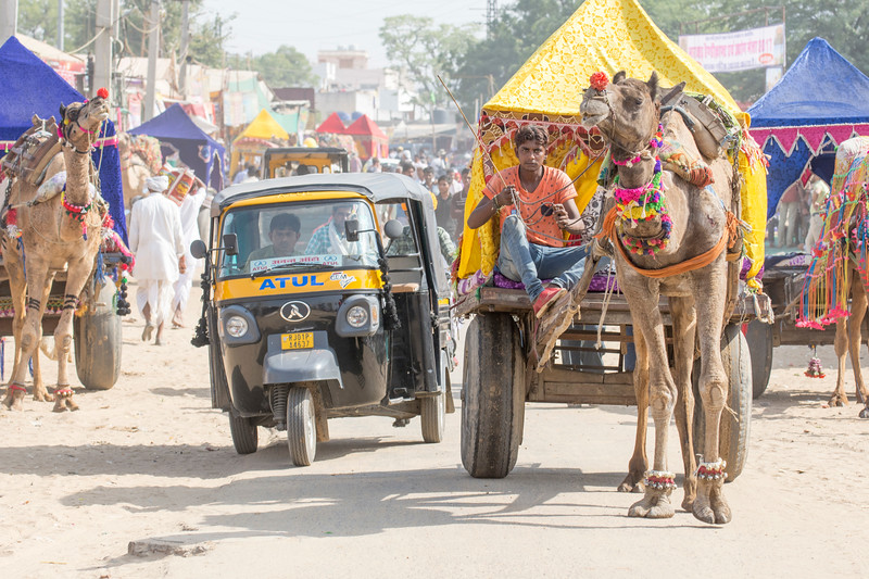 Tuk tuk v. Camel cart. Who Will Win?