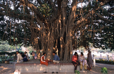 Under the tree, near Dakshineshwar Kali temple, Kolkata.