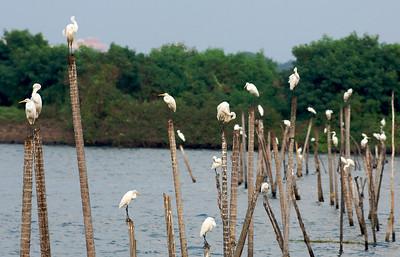 Waiting for the fishing boats to return, Cochin, Kerala.