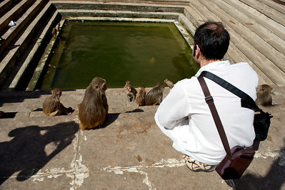 Fabrizio surrounded by monkeys, Monkey Temple, Galwar Bagh, Jaipur.