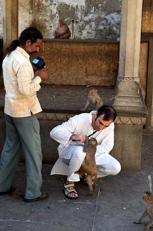Fabrizio feeding the monkeys, Monkey Temple, Galwar Bagh, Jaipur.