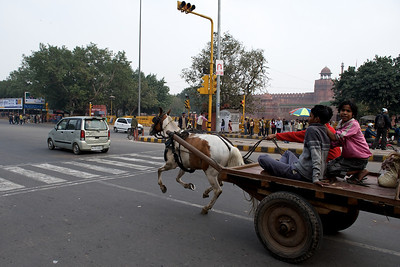 Horsecar through orange, Old Delhi.