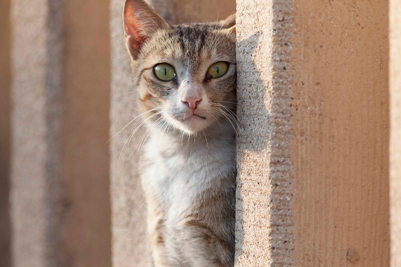 A Mumbai cat