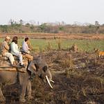 Elephant back safari in Kaziranga NP