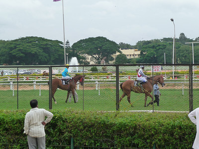 The horses being led out to the track.