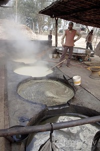 Boiling the juice into syrup. The vats get hotter and the liquid is more purified as the syrup is moved progressively through each stage