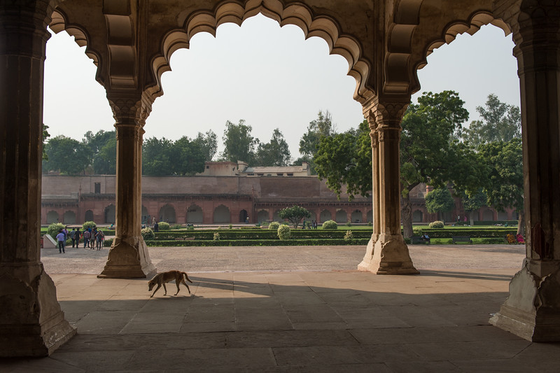 Dogs enjoyed the monuments as well...Agra Fort.