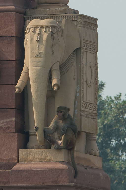 Standing guard at government building, Delhi.