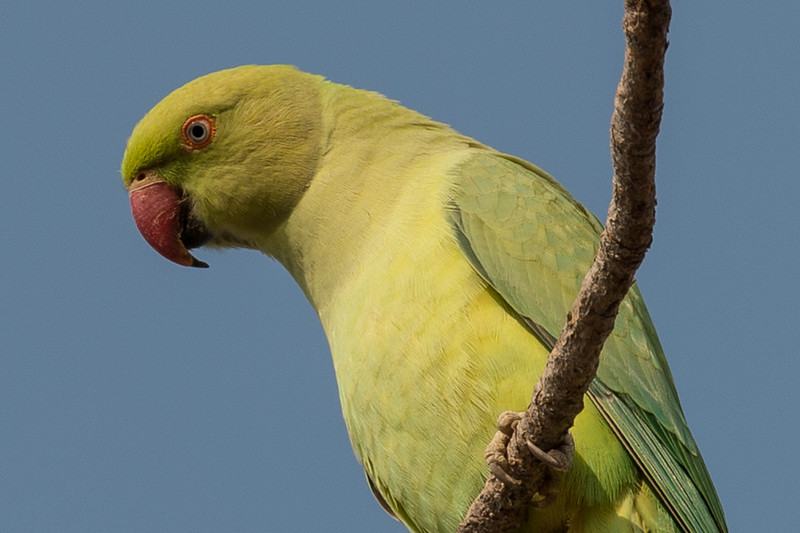 The parrots were pretty common, but still beautiful.