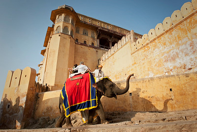 Elephant rides at the Amber Fort