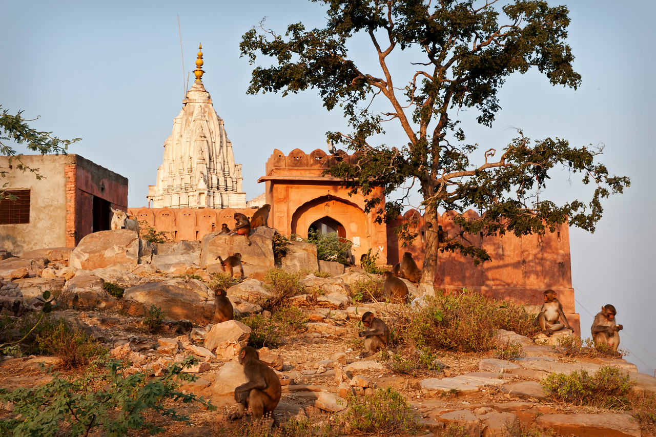 Surya Temple (sun temple) , but also known as the Monkey Temple