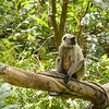 We continued to have some great monkey sightings on the afternoon safari as well.