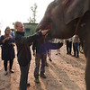 Denise and Chuck (our tour mates) also fed the elephants bananas from our breakfast.