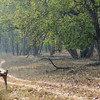 Bandhavgarh was a scenic park with nicely shaded roads.