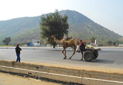I'd walk a mile for a camel.