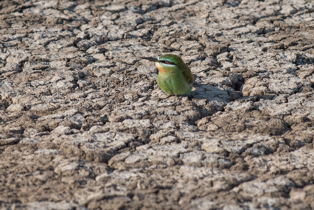 The ground gets dried out and salts come to the surface. Oh, and there was this bird there...