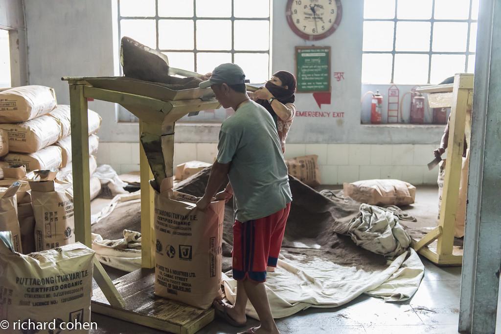 Darjeeling, tea factory. This is how tea gets bagged.
