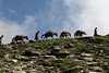 Trekking with horses in Kashmir, India