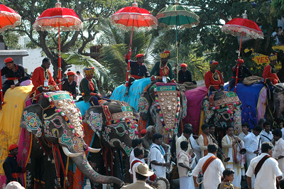 A second group of elephants. Dasara parade in Mysore.