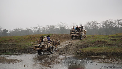 Oxcart ride into Chitwan NP