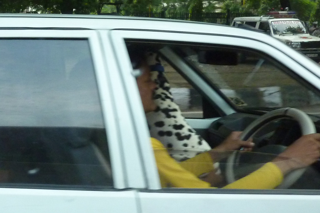 That's a dalmatian in the front seat !