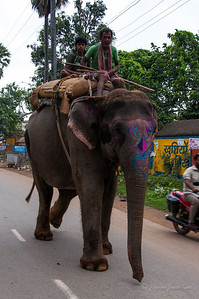 Elephant in Bodh Gaya