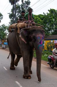 Elephant in Bodh Gaya