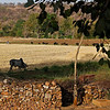 India_April 07, 2008__42