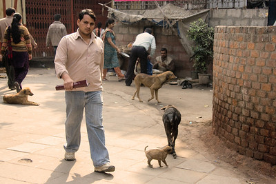 We got off the metro at Chandni Chowk station and noticed this part of Old Delhi has a dog problem.  Photographed February 2009 - © 2009 Lesley Bray Photography - All Rights Reserved.