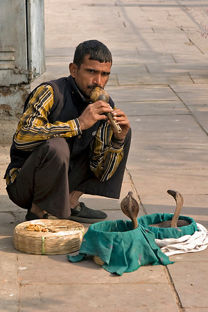 Snake charmer across the road from the Lakshmi Narayan Temple.  Those cobras are real !  Photographed February 2009 - © 2009 Lesley Bray Photography - All Rights Reserved.
