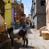A street in Diu, India.