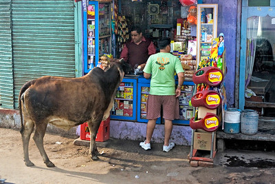 The shopkeeper is feeding the cow from a packet buns.  Photographed February 2009
