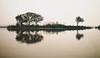 okhla popular birding spot, new delhi, india