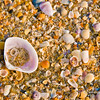 Seashells on Cavelossim Beach, Goa, India