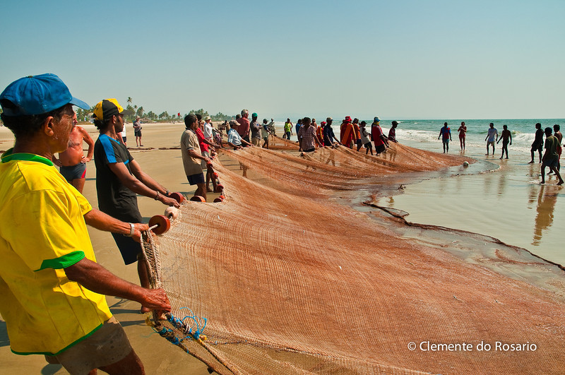 "Fishermen bring in the ""catch"" on Varca Beach, Goa, India"