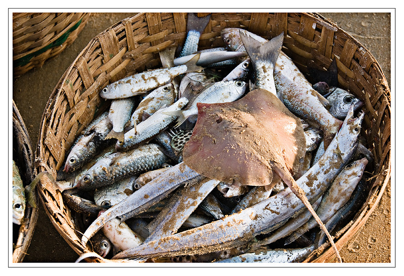 Fresh fish from the ocean on Varca Beach, Goa, India