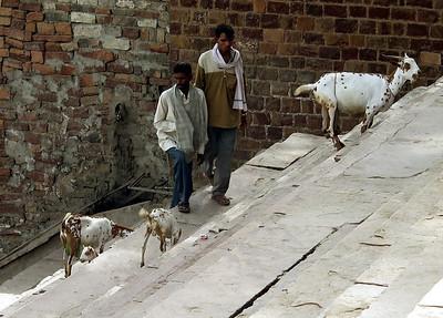 India 2003