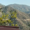 Per Murghai @kapsshimla:  This is labranum or Amaltas yellow necklaces.bloom in June and have long fruit with little leaves. Sometimes fushes in monsoon