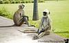 Some langur monkeys lazing in Akbar's tomb