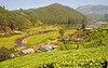 More of Munnar - tea gardens and greenery. We get some exotic tea, apparently from the highest tea plantations in the world, at some 8000+ ft